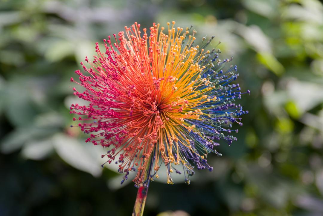 Una flor pero no cualquiera